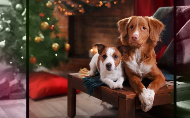 Holiday Gift Guide – Christmas 2018