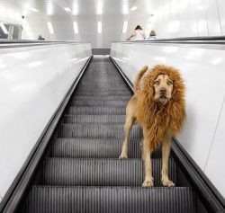 The Fantastic 'Lion Dog' + other Weekly Discoveries