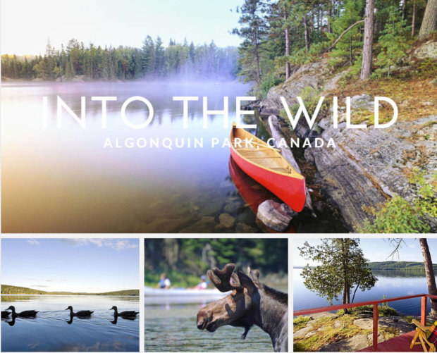 Into the Wild: Escape to the Algonquin