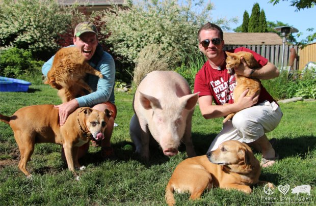 How One Pig Convinced Thousands to go Vegan